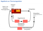 Regelkreis zur Thermoregulation