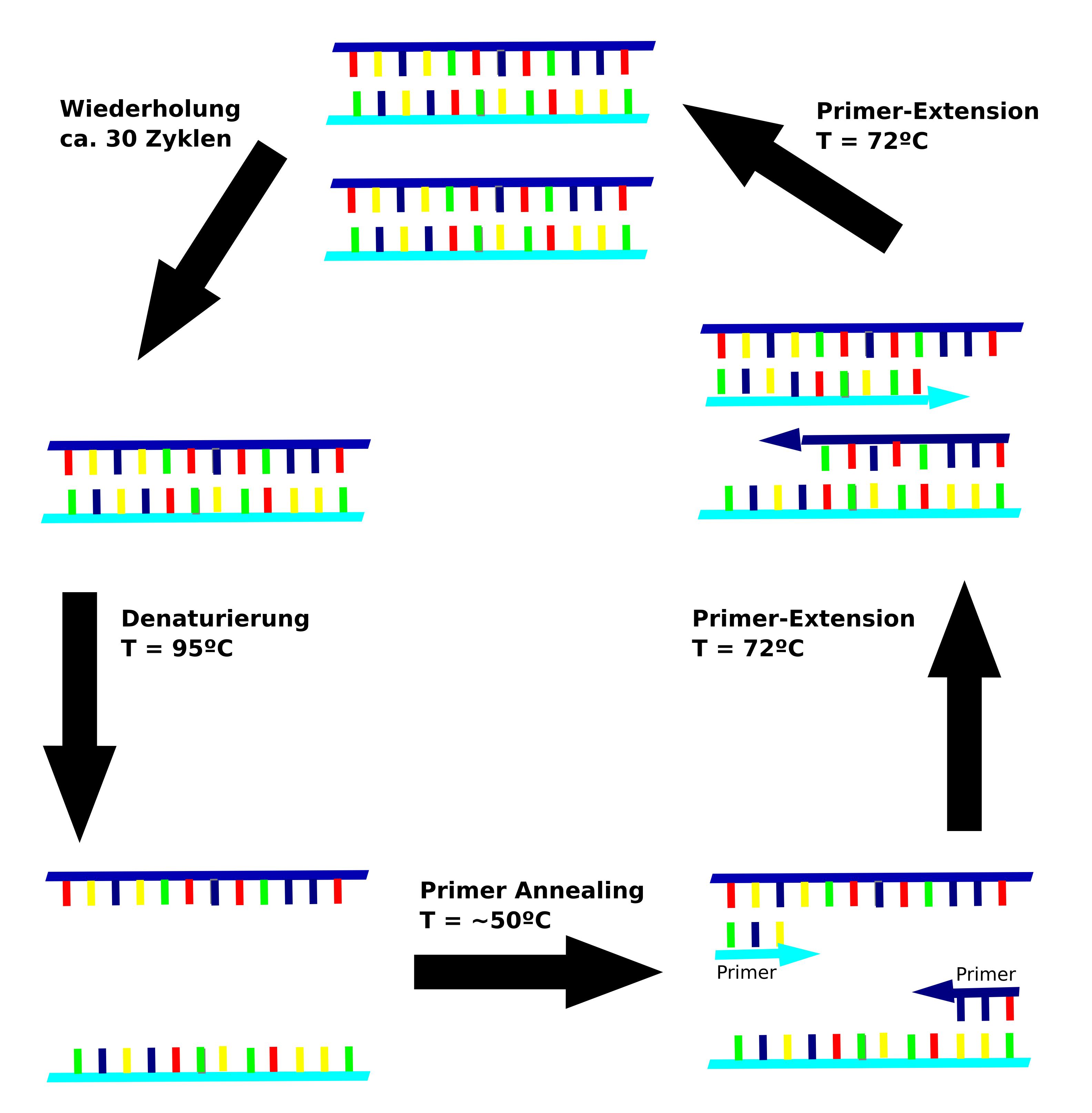 Multiplex Definition Methode Polymerase Ketten Reaktion Online Kurse