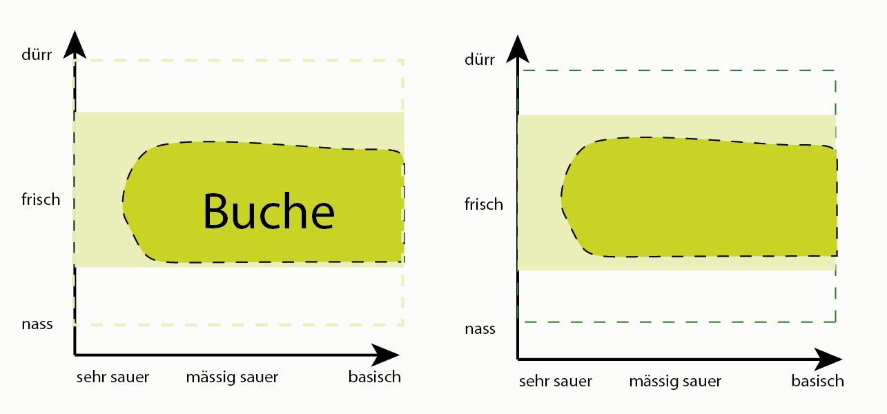 birke baum related keywords suggestions birke baum. Black Bedroom Furniture Sets. Home Design Ideas