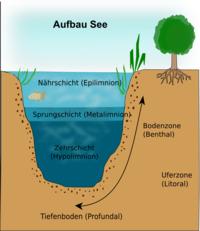 Okosystem See Nahrungskette Gliederung Und