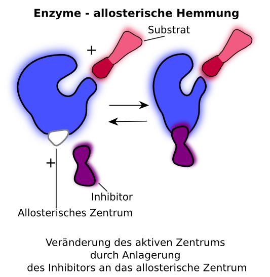 Allosterische Wechselwirkung Stoffwechsel