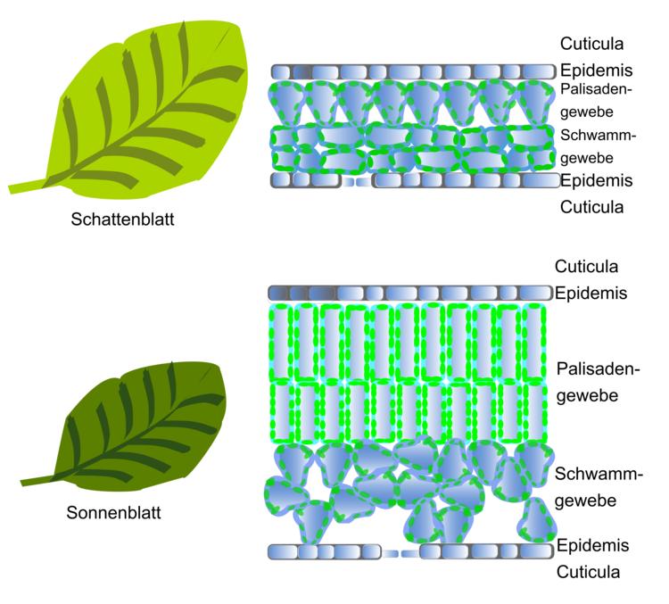 Einfluss von Wasser- und Ionenverfügbarkeit auf Pflanzen