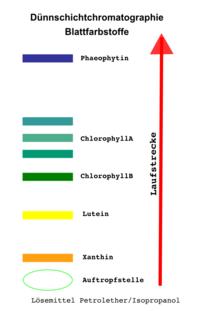 Fotosynthese - online lernen auf abiweb.de