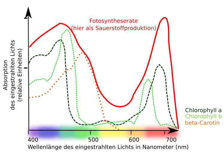 Frühe Experimente zur Fotosynthese - Stoffwechsel