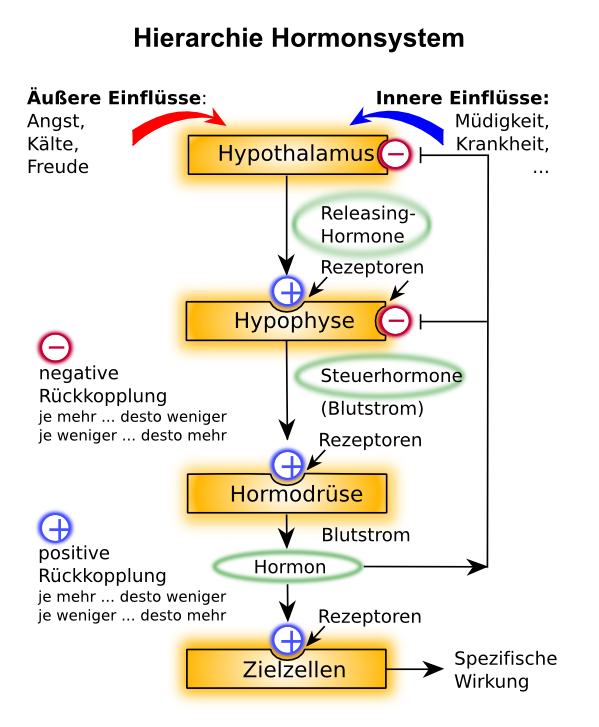 Homöostase – Prozessregulierung im Körper