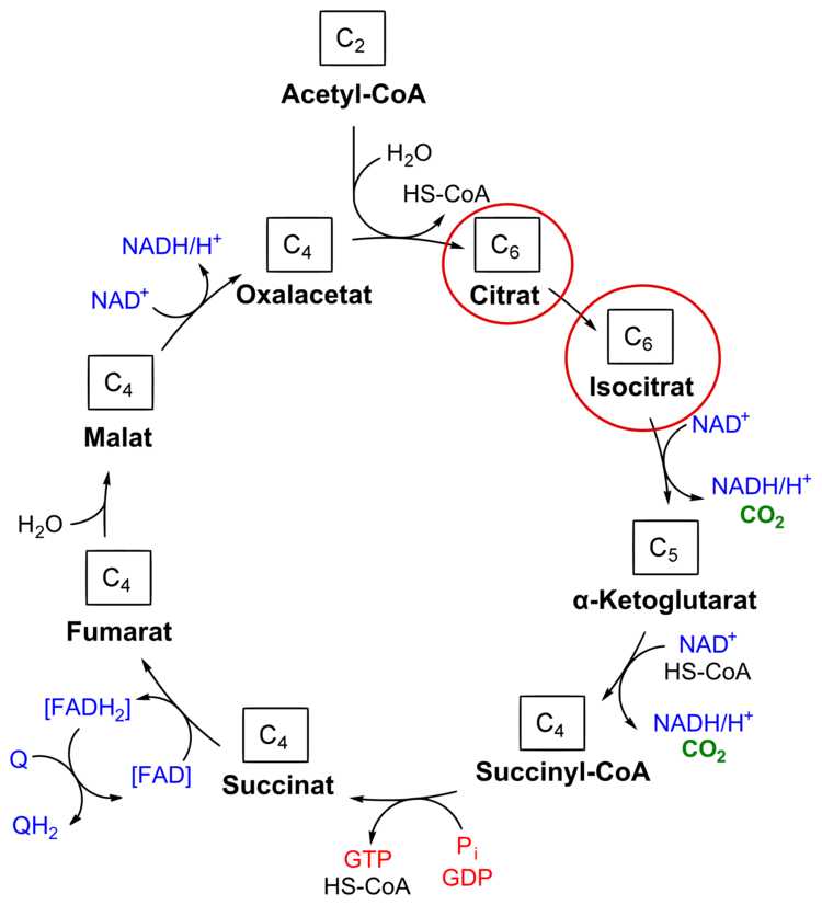 51 TCA_cycle_citrat.emf