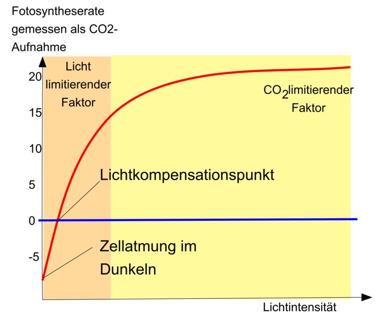 Fotosynthese - Ökologie - Abitur-Vorbereitung