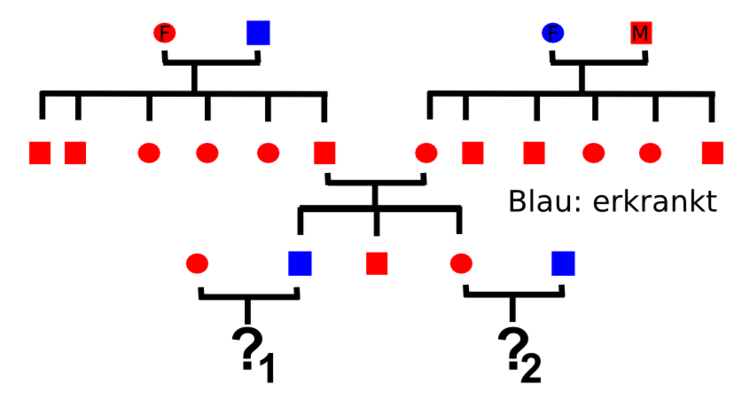 Stammbaumanalysen - Molekularbiologie / Genetik