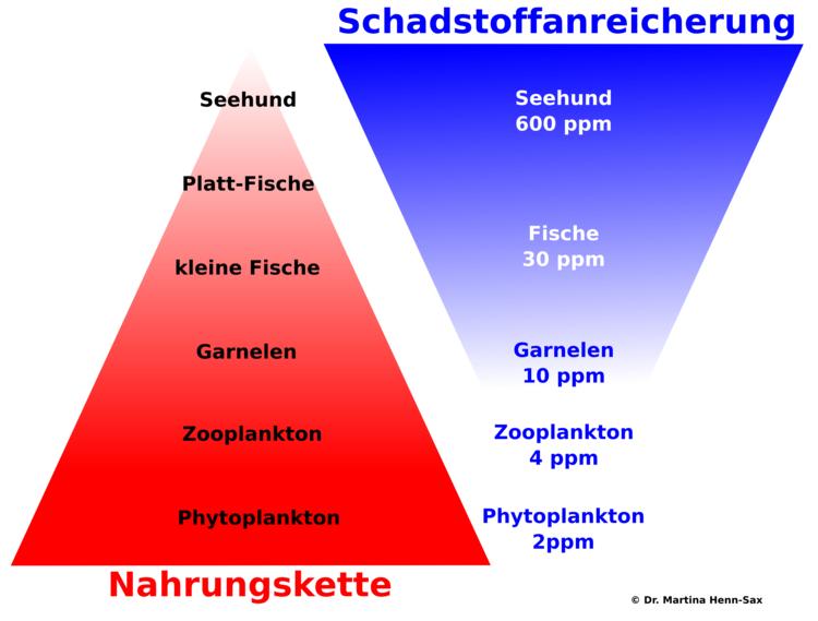 Schadstoffanreicherung - Umkehrung der Nahrungskette