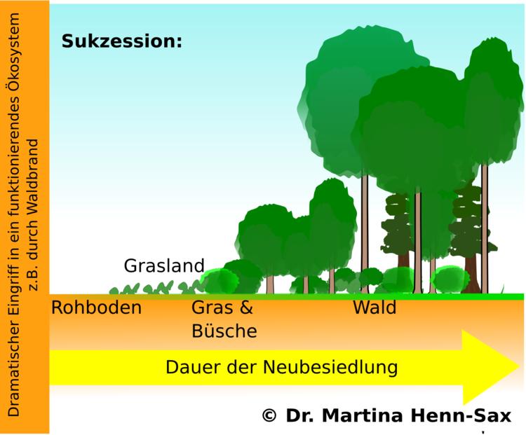 Raumliche Und Zeitliche Struktur Des Okosystems