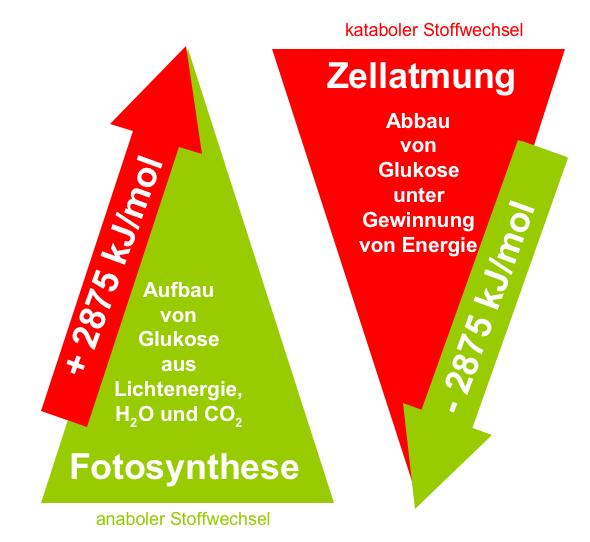 Gemeinsamkeiten und Unterschiede bei diesen ATP..