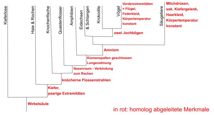 Stammbäume erstellen & verstehen - Evolution