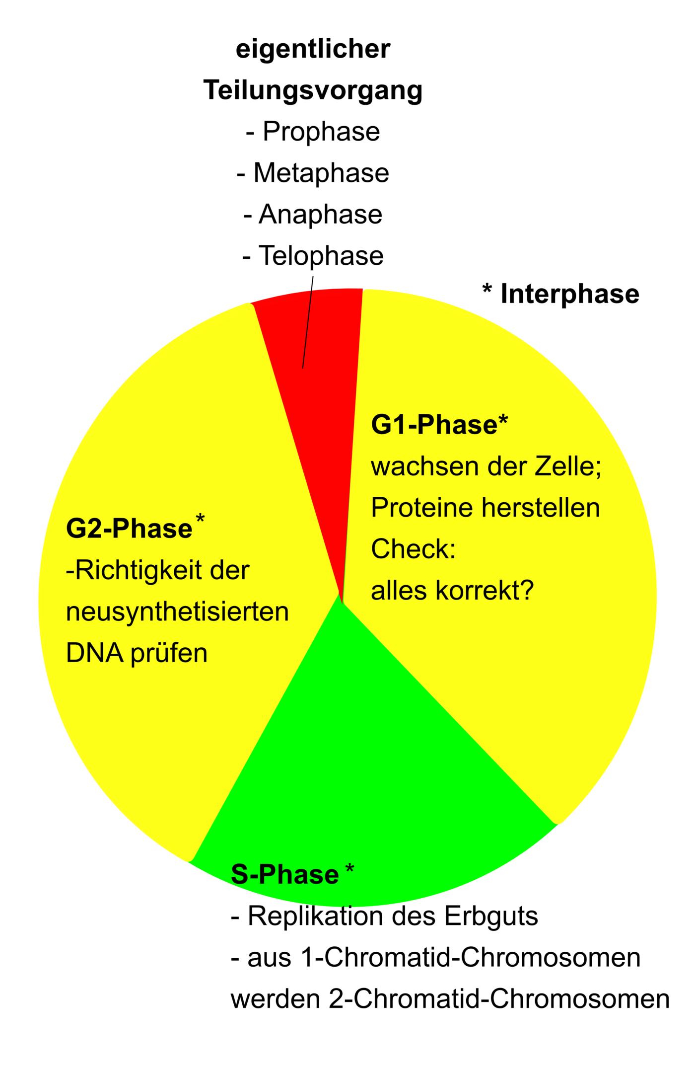 Zellteilung - Molekularbiologie / Genetik